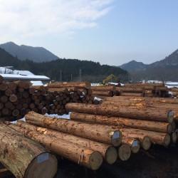 木材の競り市とは?