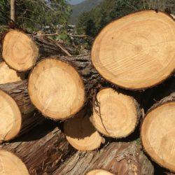 伐採現場の見学