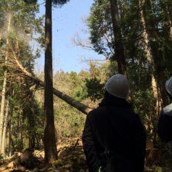 森の社会見学個別ツアー開催