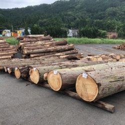 木材の競り市