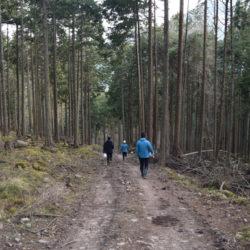 丹波の木 伐採体験